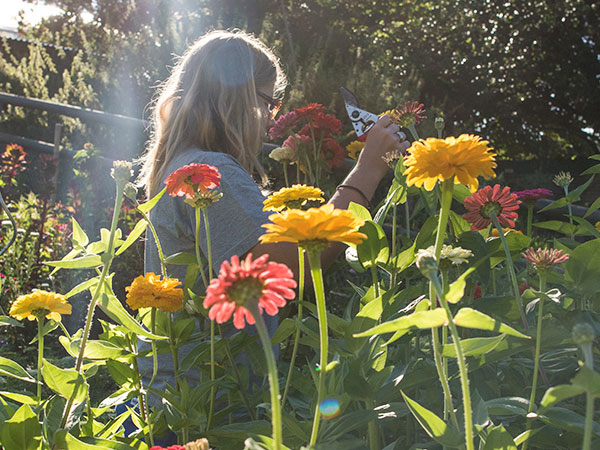 Bild vom Blumenschneiden
