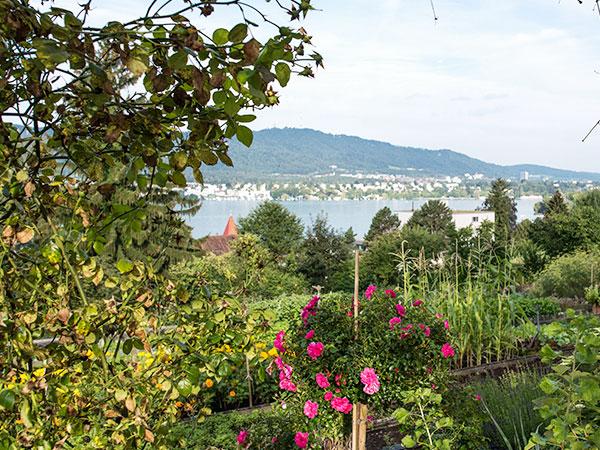 Bild der Aussicht vom EPI Areal auf den Zürichsee