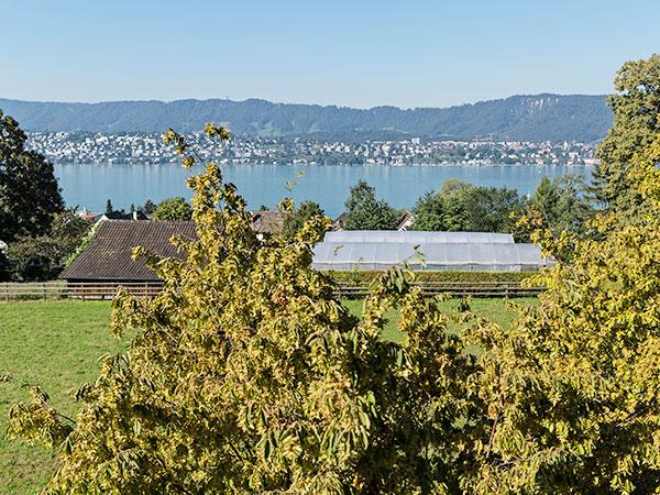 Bild der Aussicht auf den Zürichsee